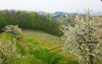 Vineyard Estate near Ptuj